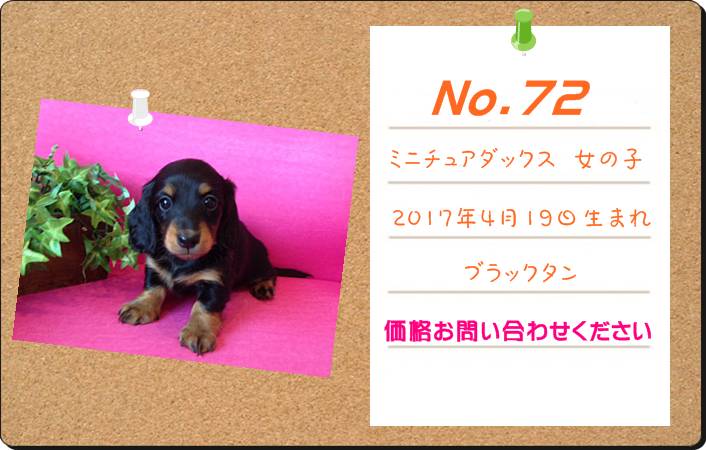 PUPPY_72.PNG - 529,190BYTES