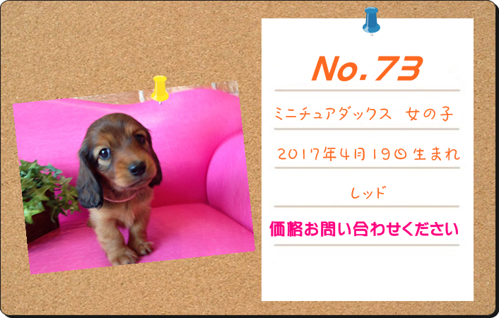 PUPPY_73.PNG - 530,294BYTES