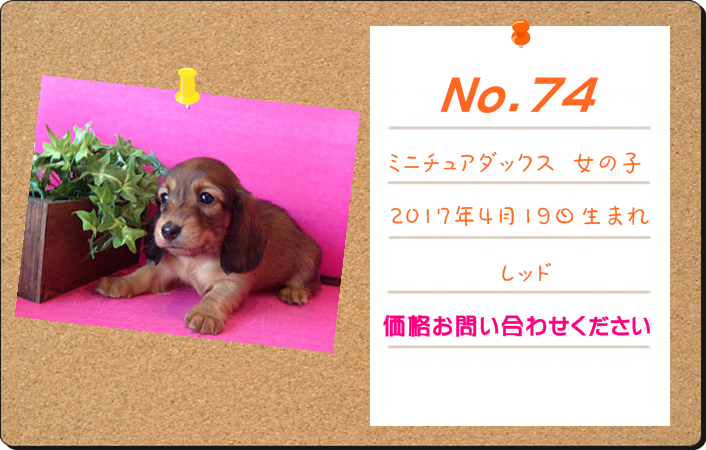 PUPPY_74.PNG - 529,241BYTES
